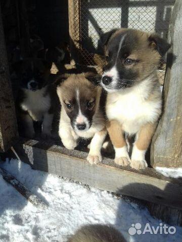 Найденные собаки с похожим описанием