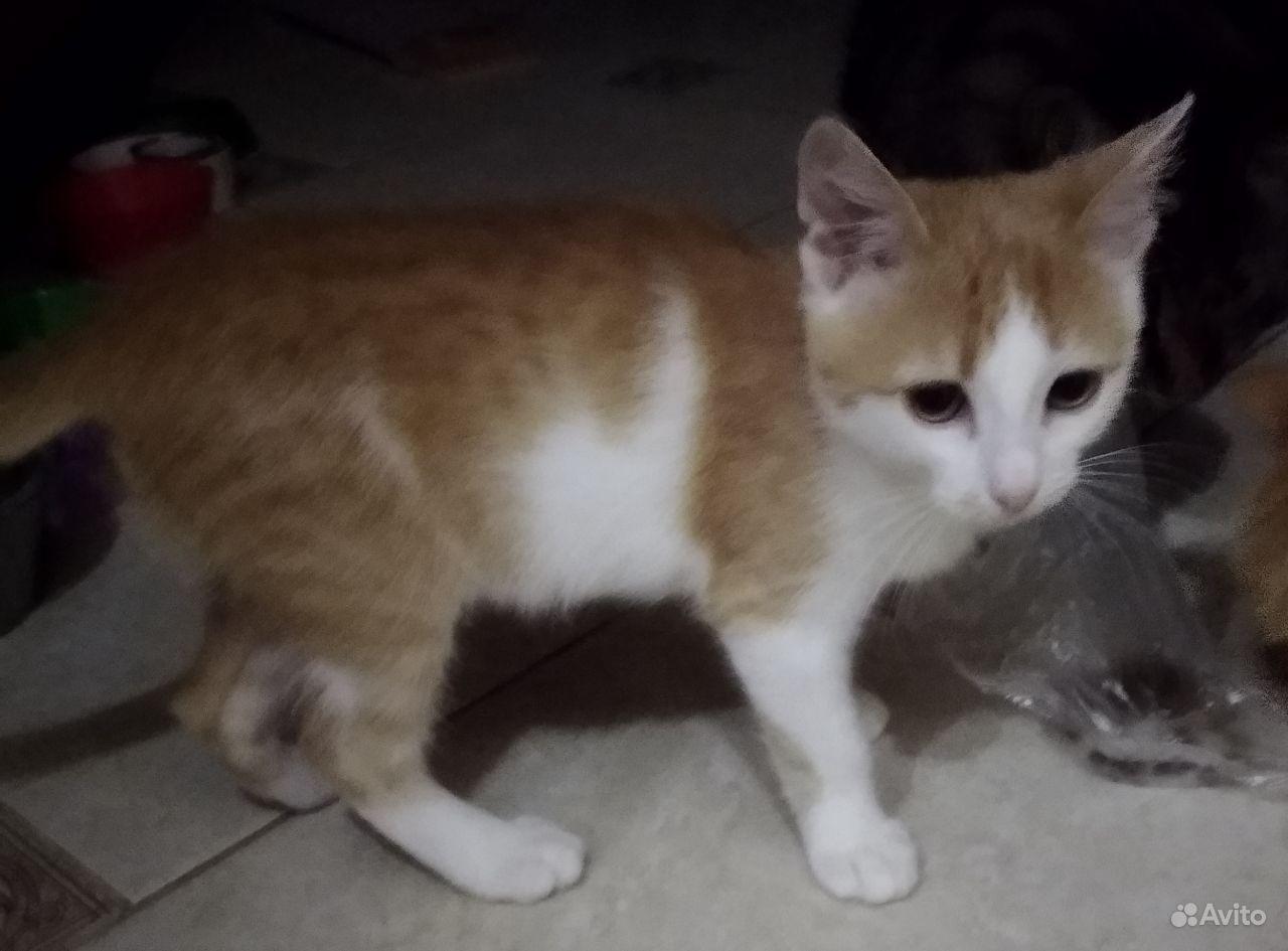 Котенок очень редкой неизвестной породы