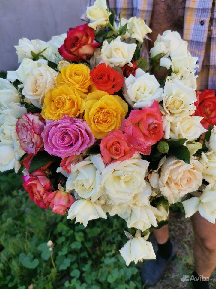 Розы на срезку. Букеты купить на Зозу.ру - фотография № 3