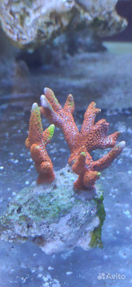 Морские кораллы купить на Зозу.ру - фотография № 1