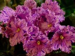 Комнатные цветы купить самара, букеты цветов белая калла