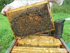 Пчелки, приносящие мед