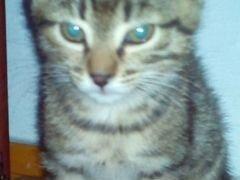 2-месячные котята (бесплатно)