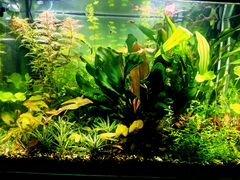 Аквариумные растения-прополка