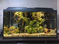 Аквариум с рыбами и декорациями 100 л