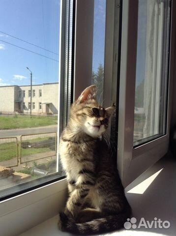 Авито котята в добрые руки кострома