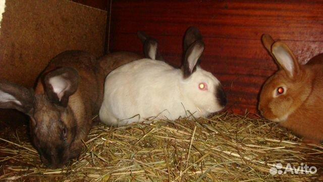 Объявление продам кроликов мясо by частные объявления запчасти на шевроле авео