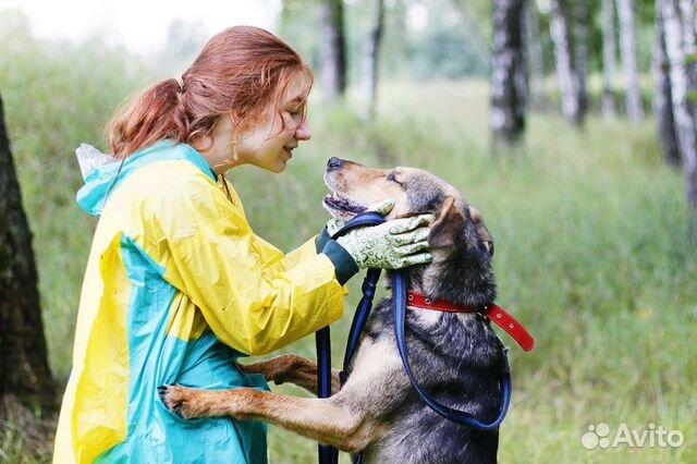 Отдам в добрые руки собаку Стенли купить на Зозу.ру - фотография № 6