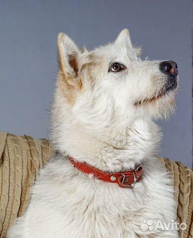 Юла потрясающая девчонка Собака в добрые руки купить на Зозу.ру - фотография № 5