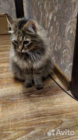 Кошка Мафа
