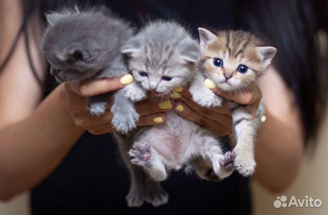 Котята в добрые руки  89383168770 купить 1