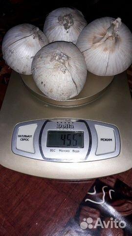 Чеснок рокамболь слоновий чеснок и картофель семян  89304200228 купить 4