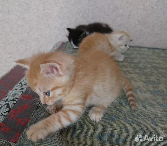 Котята в добрые руки  89272793404 купить 6