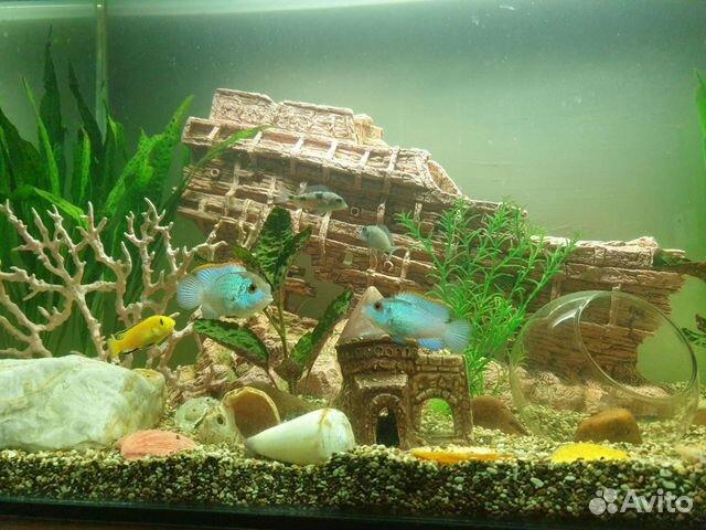 Аквариум с рыбками и декорациями  89196043887 купить 4