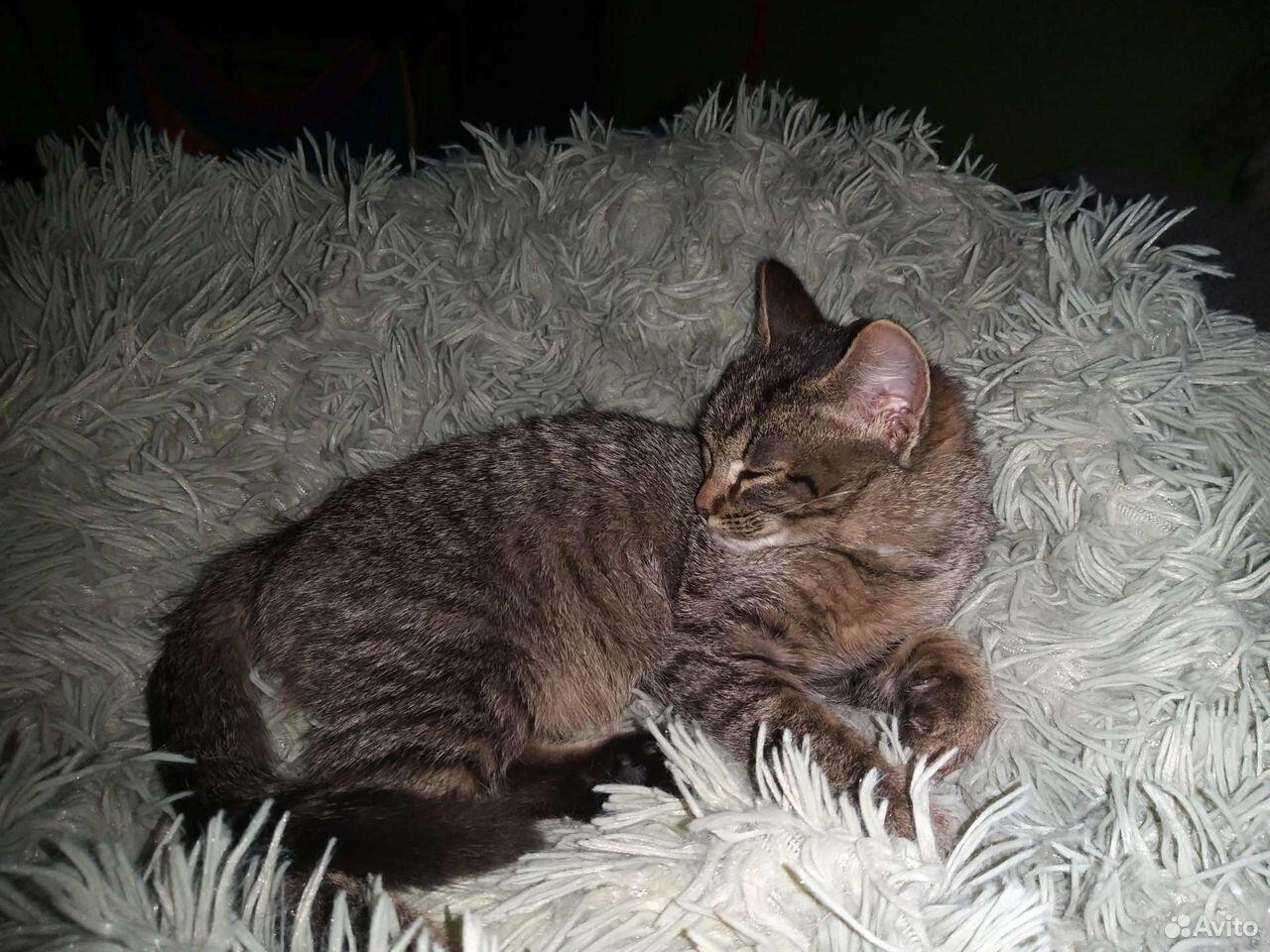 Отдам серого котенка в добрые руки  89502787846 купить 1