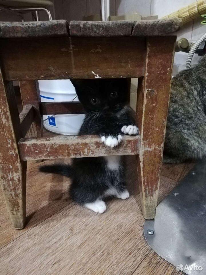 Котенок девочка  89831883735 купить 6