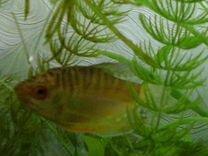 Продам рыбок, растения