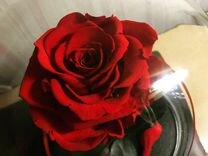 Роза в коулбе