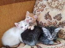 Котята сибирской кошки в добрые руки
