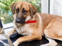Собака друг бесплатно — Собаки в Геленджике