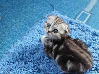Кошечки на любой выбор
