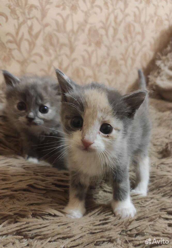 Kätzchen  89105678438 kaufen 1