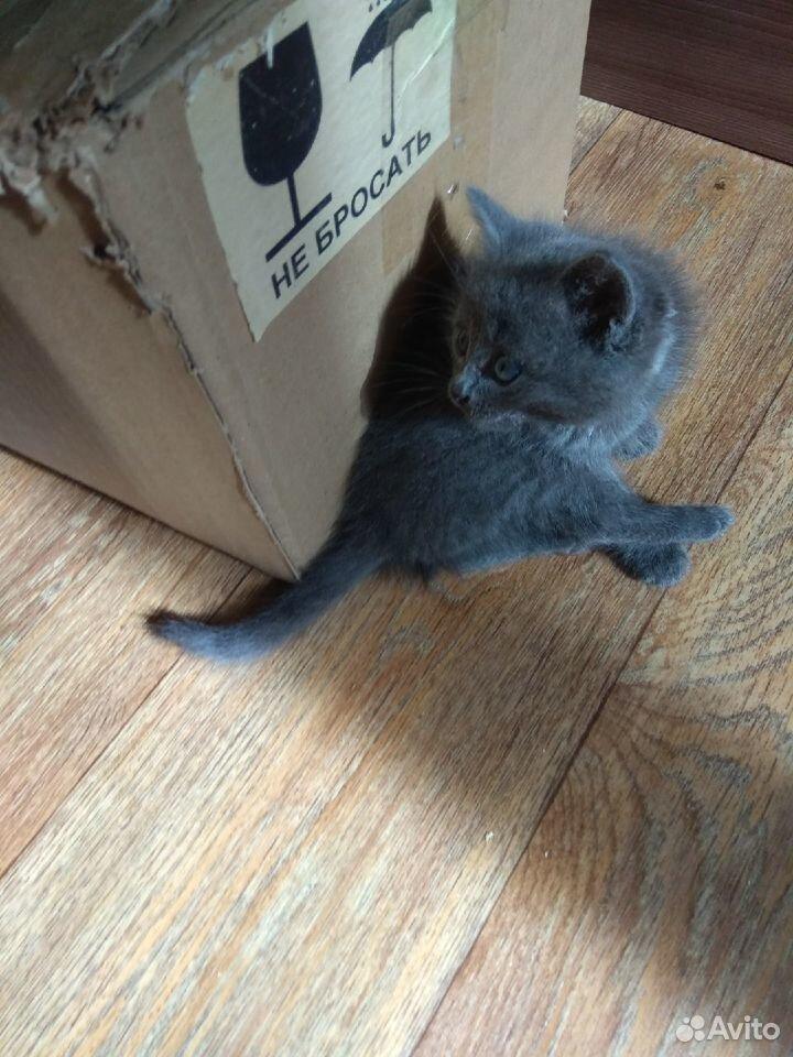 Котятки  89198135801 купить 1