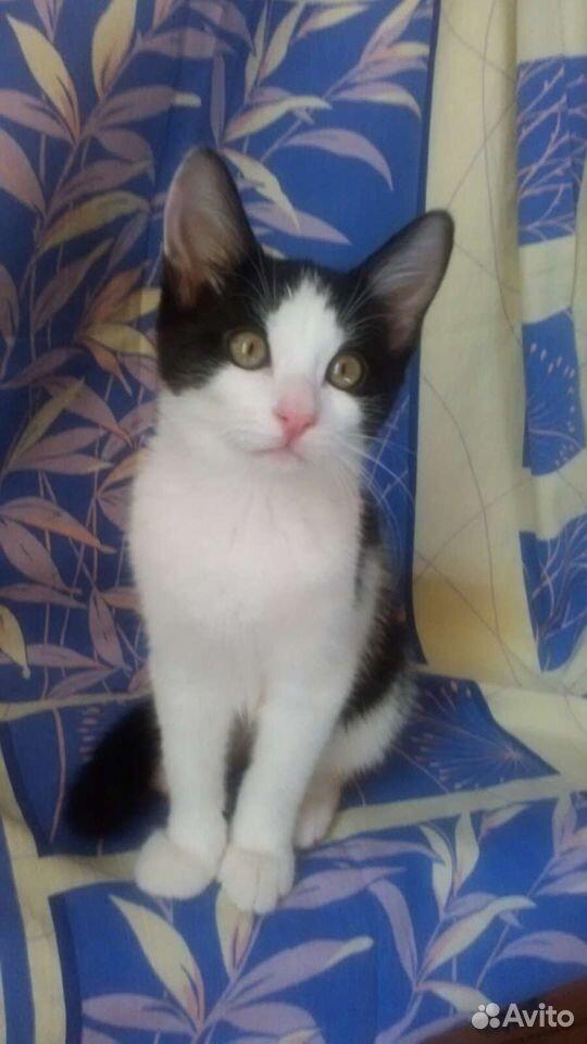 Котята в добрые ручки  89064108930 купить 1