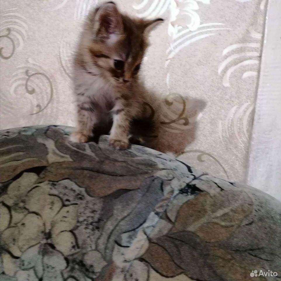 Котята в добрые руки  89276495515 купить 2