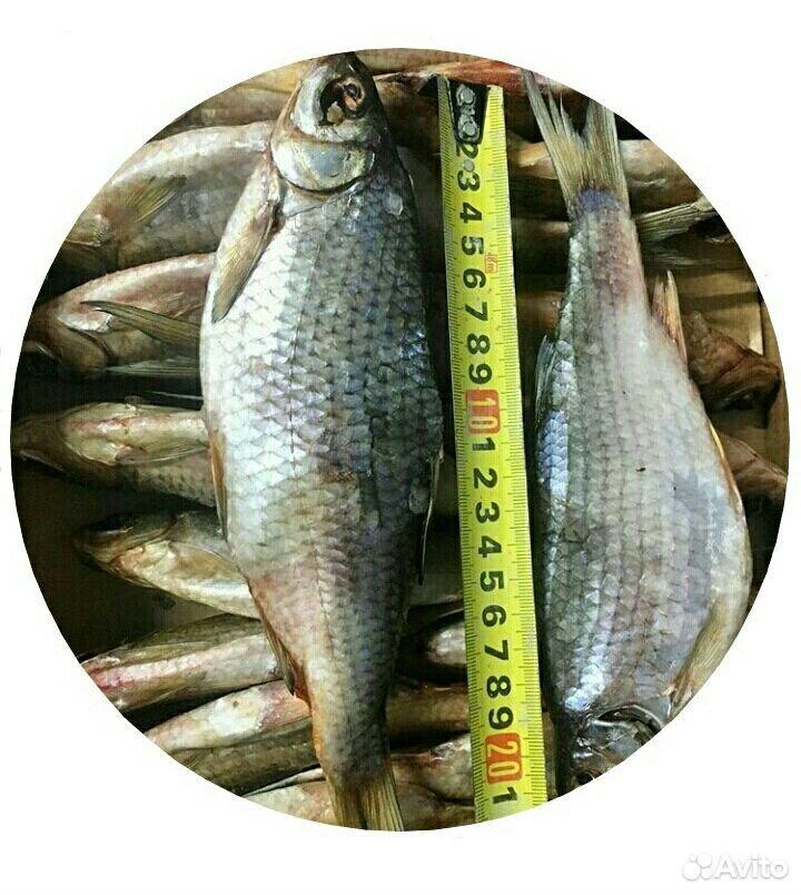 Вяленая рыба Привезу к дому  89083042443 купить 1