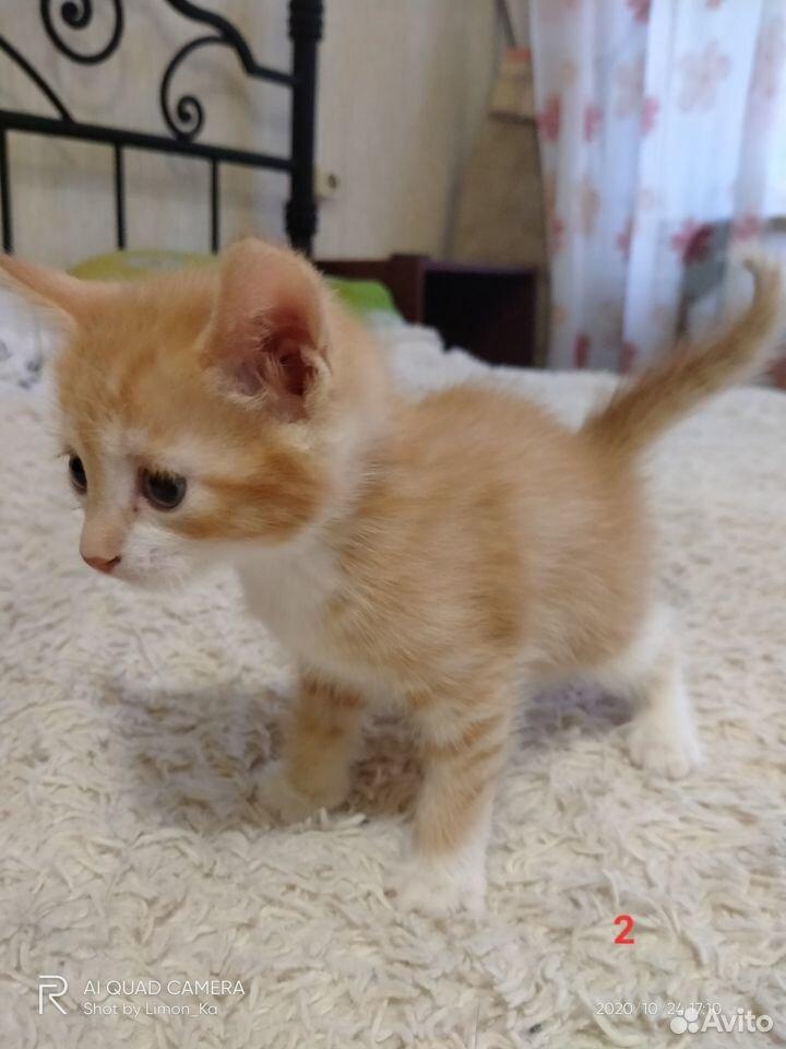 Отдам миленьких котят  89039946144 купить 6